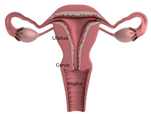 gravid når man har menstruation you date